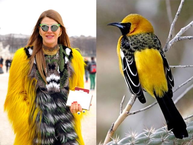 ana-dello-russo-like-a-bird-1
