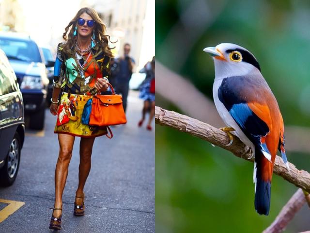 ana-dello-russo-like-a-bird-12