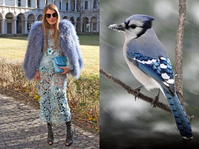 ana-dello-russo-like-a-bird-2