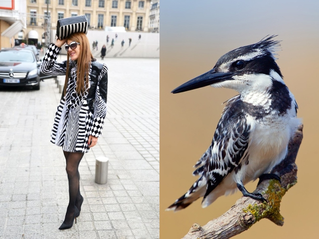 ana-dello-russo-like-a-bird-4