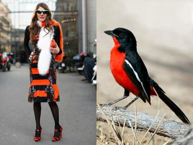 ana-dello-russo-like-a-bird-5