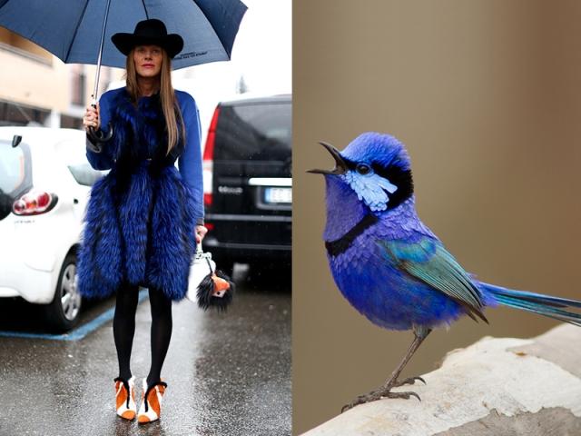 ana-dello-russo-like-a-bird-7