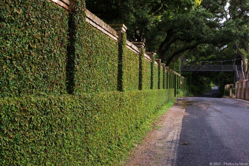 Muro verde for Muros verdes beneficios