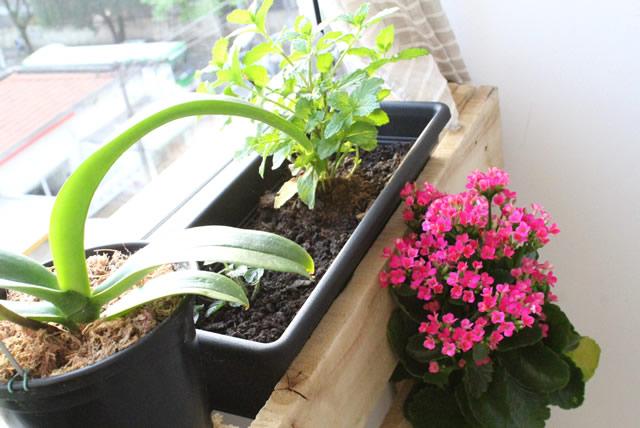jardim-vertical-horta-apartamento-pallet (3)