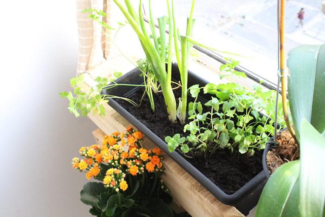 jardim-vertical-horta-apartamento-pallet (4)