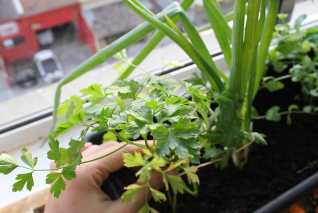 jardim horta apartamento:jardim-vertical-horta-apartamento-pallet (8)
