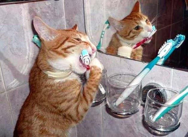 gato-escovando-os-dentes